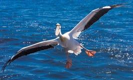 Bird, Seabird, Beak, Albatross royalty free stock photography