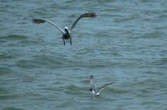 Bird, Seabird, Fauna, Sea stock images