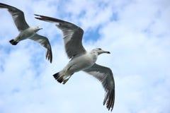 Bird, Seabird, Fauna, Sky stock photos