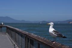 Bird, Seabird, Gull, Sea stock photo