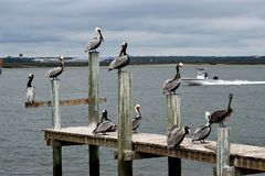 Bird, Seabird, Pelican, Water stock images