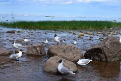 Bird, Seabird, Water, Fauna stock images
