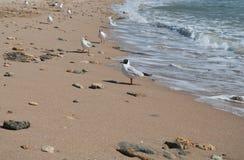 Bird on seacoast. Flight of seagulls on seacoast, sharpness on seagull Royalty Free Stock Images
