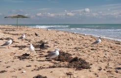 Bird on seacoast. Flight of seagulls on seacoast, sharpness on seagull Royalty Free Stock Photography