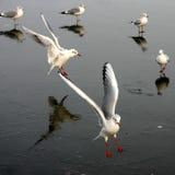 Bird seagull Stock Photo