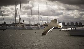 Bird, Seagull, Ave, Beach, Wings Stock Images