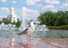 Bird seagull in a city park. Stock Photo