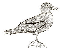 Bird seagull coloring book for adults vector Royalty Free Stock Image