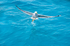 Bird seagull on sea water in ocean Stock Image