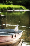 Bird Seagull, sunlight and beautiful park on the background Stock Image