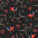 Bird Seamless Pattern. Bullfinch birds on a dark background. With red berries of rowan and brier. Winter/Merry Christmas Collection.Vector Illustration Stock Photos