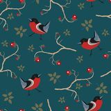 Bird Seamless Pattern. Bullfinch birds on a dark background. With red berries of rowan and brier. Winter/Merry Christmas Collection.Vector Illustration Royalty Free Stock Photos