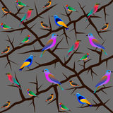 Bird seamless pattern Royalty Free Stock Photography