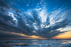 Bird on seashore. Bird flying new sea shore on sunset. Anapa, Russia stock images