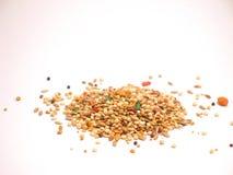 Bird Seed. Fortified Bird Seed Stock Photos