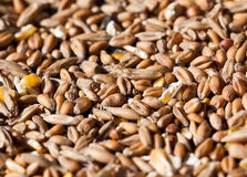 Bird Seed Stock Photo