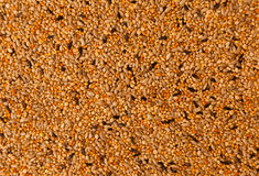 Bird seed Royalty Free Stock Photography