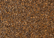 Bird seed Stock Image