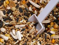 Bird seed Stock Photo