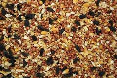 Bird seed background Stock Photo
