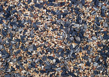 Bird seed background Royalty Free Stock Photo