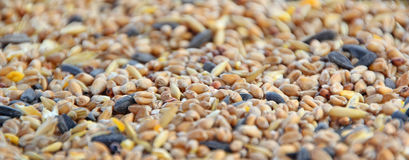 Bird seed background Stock Photography