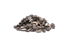 Bird seed Royalty Free Stock Image