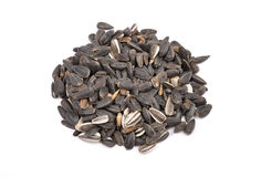 Bird seed Stock Images