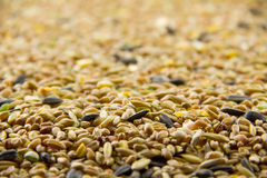 Bird seed, differential focus Royalty Free Stock Photos