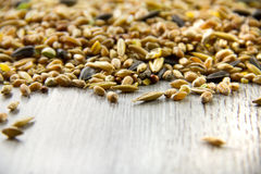 Bird seed mix, differential focus Stock Photo
