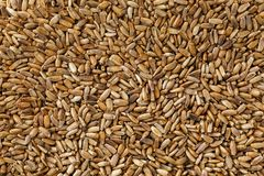 Bird seed, mixed granular food for canaries and budgerigar stock images