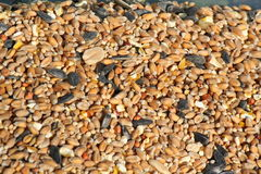 Bird seed texture background. Stock Image