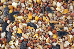 Bird seed texture background Stock Images