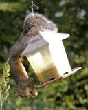 Bird seed thief Stock Image