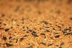 Bird Seed. Wild outdoor bird seed background Stock Image