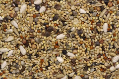 Bird Seeds Royalty Free Stock Images