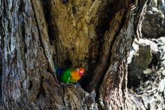 The bird selects the nest in the hollow, Serengeti, Tanzania. Africa Stock Photo