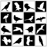 Bird set Royalty Free Stock Photo