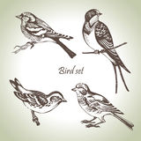 Bird set. Hand drawn illustration Royalty Free Stock Image