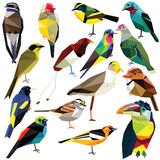Bird set. Birds-set colorful birds low poly design  on white background Stock Image