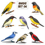 Bird set cartoon colorful vector illustration Stock Photos