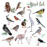 Bird set cartoon colorful vector illustration. Educational material vector illustration