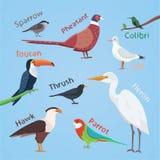 Bird set cartoon colorful vector illustration. eps 10. Royalty Free Stock Photos
