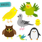 Bird set.. Colibri, canary, parrot, dove, pigeon, owl, chicken penguin. Cute cartoon characters icon. Baby animal zoo collection.  White background Flat design Royalty Free Stock Photo