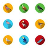 Bird set icons in flat style. Big collection of bird vector symbol stock illustration Royalty Free Stock Image