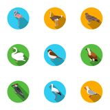 Bird set icons in flat style. Big collection of bird vector symbol stock illustration Stock Images