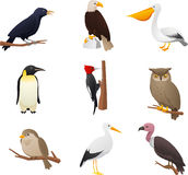 Bird set 2. Realistic Bird collection, with Owl, Pelican, Woodpecker, Penguin, Eagle, Bird, cardinal and raven  illustration Royalty Free Stock Images