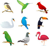 Bird set 1. Realistic Bird species collection, with nine different bird species  illustration Stock Photography