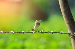 Free Bird Setting On Wire And Sunlight Stock Photo - 159590320
