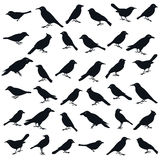 Bird shape. Collection of the bird silhouettes isolated in white, design elements Royalty Free Stock Image